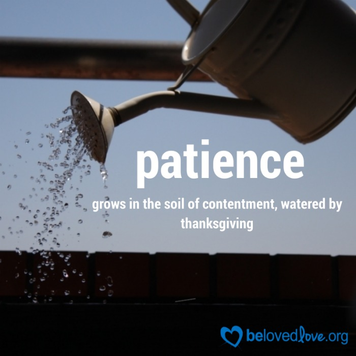 Patience grows in the soil of contentment, watered by thanksgiving. From belovedlove.org