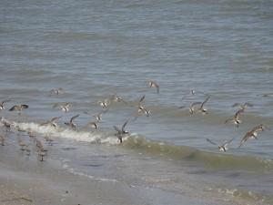 Birds at Hilton Head