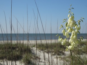 Blooms at the beach at Hilton Head