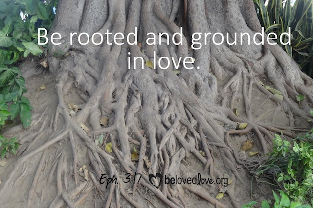 "Huge tree with tangle of roots and the caption, ""Be rooted and grounded in love."""