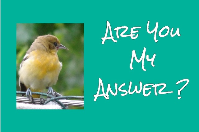 Little bird with caption:  Are You My Answer?