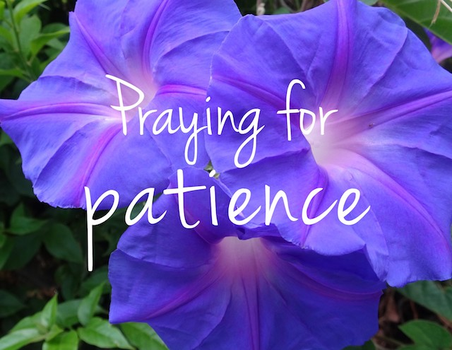 The words Praying for patience on a background of a purple petunia