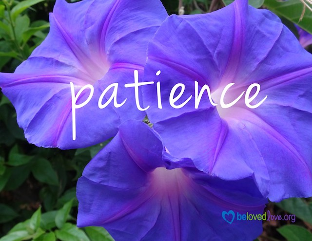 """patience"" on purple petunias"
