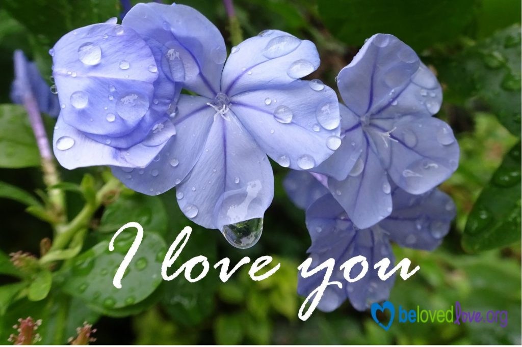 "Blue pansies with the words ""I love you"""